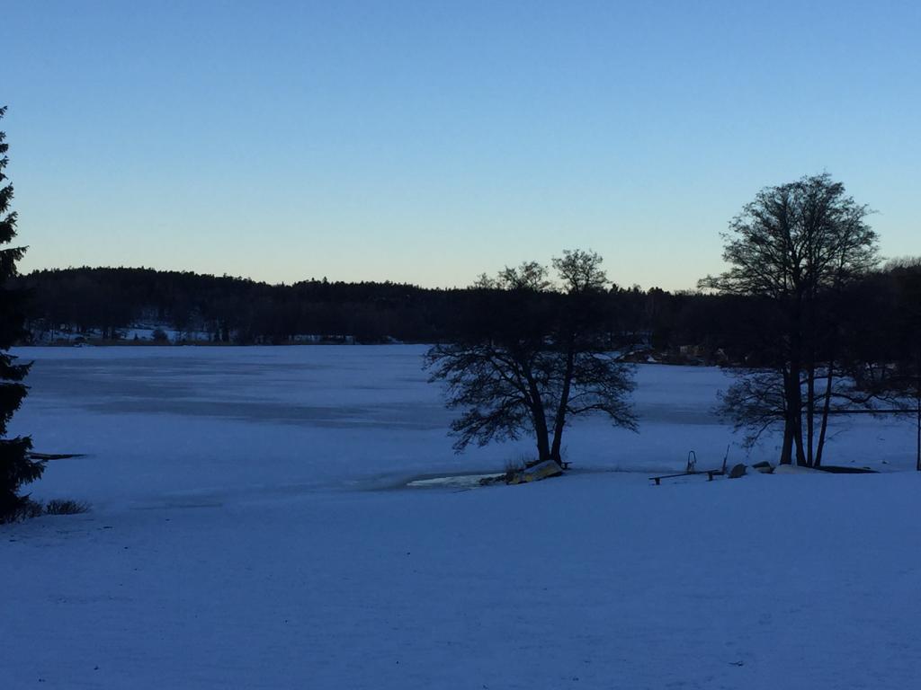 vidja_vinter1